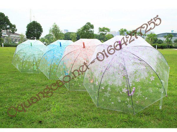 phối cảnh ô dù trong suốt
